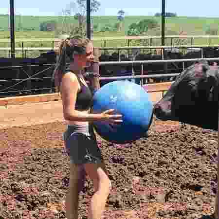 """Bola de pilates é um dos recursos do """"spa bovino"""" para deixar bois mais dóceis - Reprodução/Instagram - Reprodução/Instagram"""
