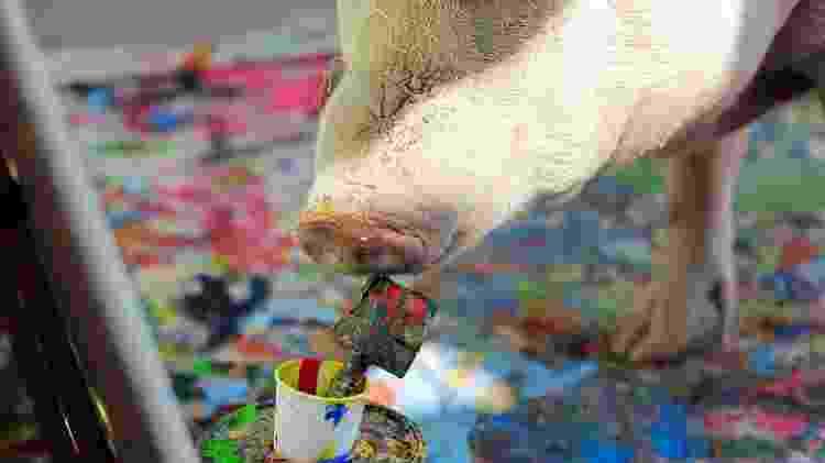 A porca Pigcasso, famosa por pintar quadros - Sumaya Hisham/Reuters - Sumaya Hisham/Reuters