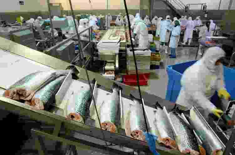 Trabalhadores chilenos processam salmão em fábrica de Puerto Ibanez, (CH) - Ivan Alvarado/Reuters - Ivan Alvarado/Reuters