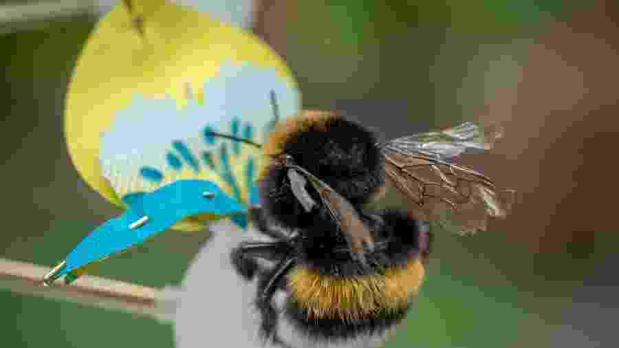 "Mamangava em flor do projeto ""Insectology: Food for Buzz"", Atelier Boelhouwer - Janneke van der Pol"