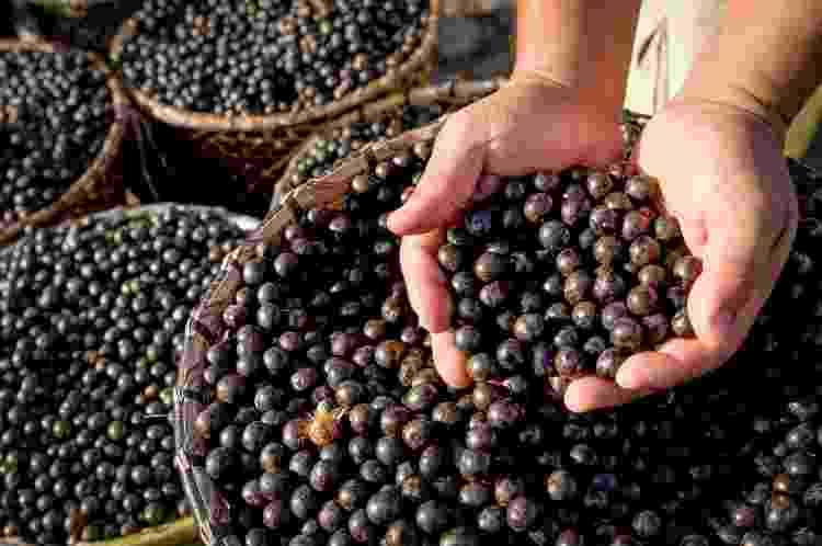 Fruto do açaí: ícone da culinária paraense - Brasil2/Getty Images/iStockphoto - Brasil2/Getty Images/iStockphoto