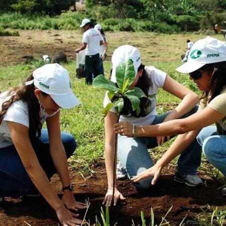 Goiânia prevê meta ousada de plantar árvores de 90% das calçadas em dois anos; serviço é disponível em outras capitais - Mauro Junio/Divulgação