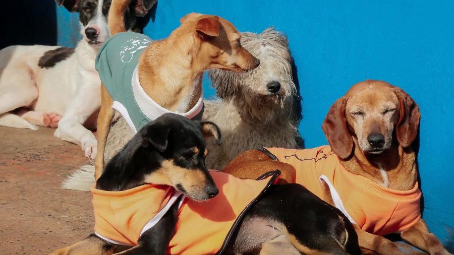 Cães que receberam roupinhas em Apucarana (PR) - Divulgação/Canil de Apucarana