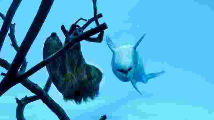 Golfinho bicho-preguiça 2 - Texas State Aquarium - Texas State Aquarium