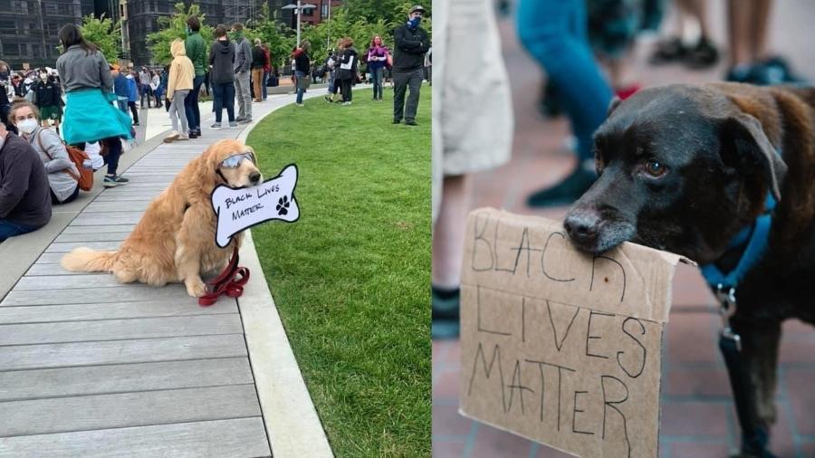 Cachorros fazem sucesso em protestos contra o racismo - Reprodução/Twitter - @jasminericegirl