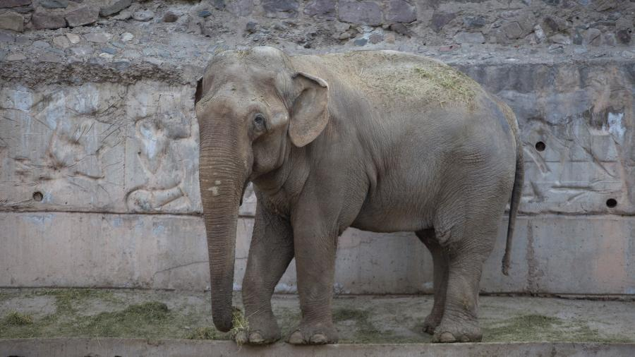 Tamy (foto) no Zoológico de Mendoza; planos é arrecadar doações para viver menos amargurado no Brasil - Divulgação