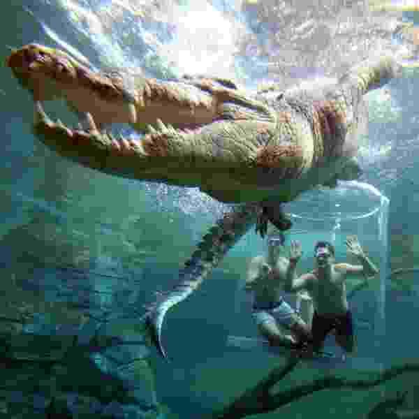Divulgação/Crocosaurus Cove