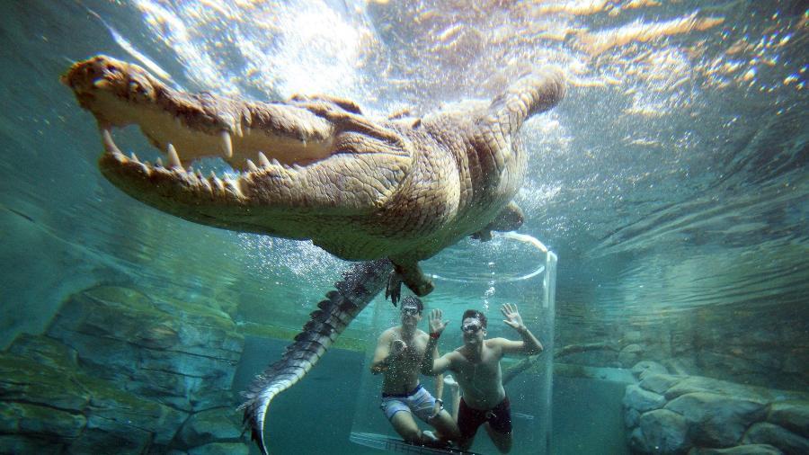 Em Darwin, turistas ficam frente a frente com crocodilo de 5 metros de comprimento - Divulgação/Crocosaurus Cove