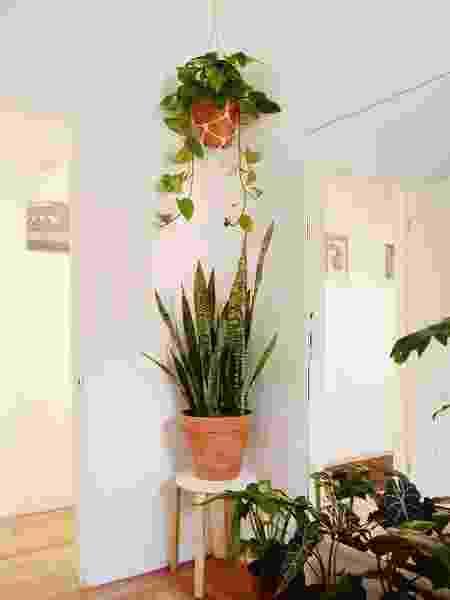 FIlodendro na decoração - Reprodução/Pinterest - Reprodução/Pinterest