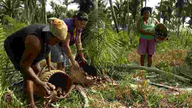 As quebradeiras de coco babaçu são uma das muitas comunidades tradicionais que vivem da diversidade do Cerrado e cuja subsistência está cada vez mais ameaçada pelos conflitos agrícolas - Peter Caton/ISPN - Peter Caton/ISPN