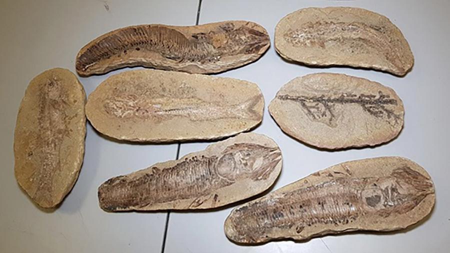Fósseis devolvidos ao patrimônio brasileiro - AFP Photo