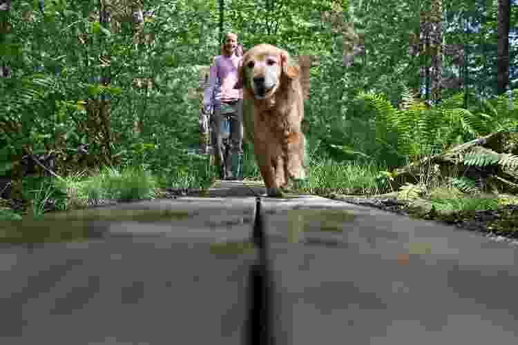 Na hora de passear com seu pet idoso, fique atento ao ritmo - Ben McCanna/Portland Portland Press Herald via Getty Images - Ben McCanna/Portland Portland Press Herald via Getty Images