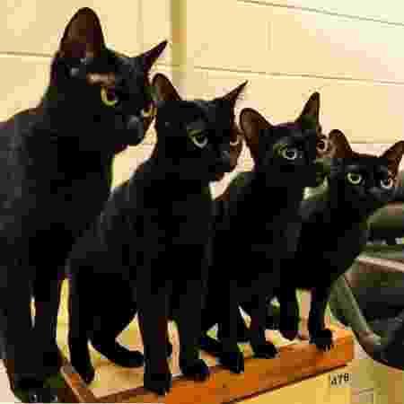 """Gatos Lucky, Pepe, Nix e Peg deram vida ao misterioso León em """"O Sétimo Guardião"""" - Arquivo pessoal"""