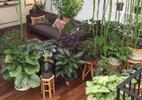 Além da samambaia: veja ideias para transformar sua casa em