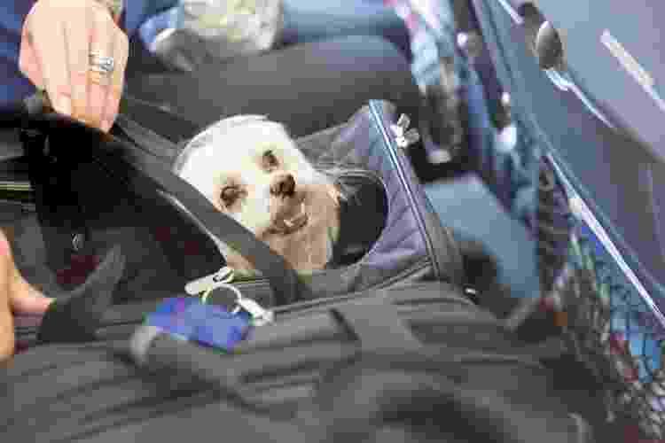 No avião, cada companhia tem suas regras para transporte de animais - Getty Images/iStockphoto - Getty Images/iStockphoto