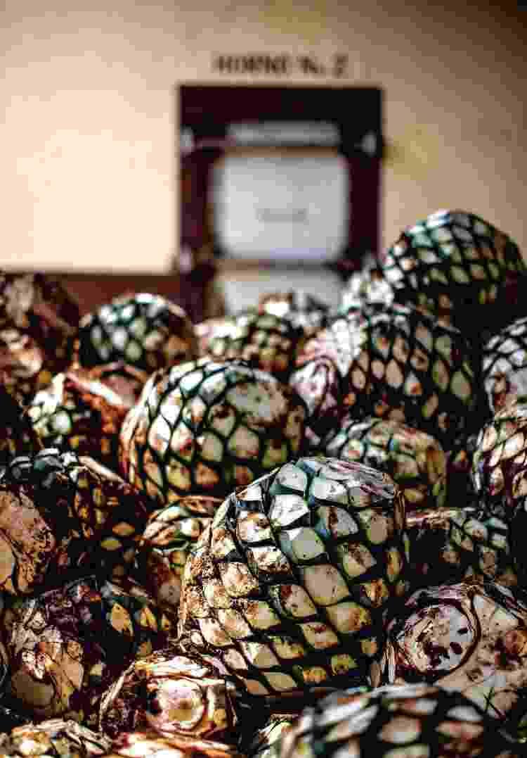 Coração do agave-azul, planta utilizada na produção da tequila; em Jalisco, no México  - Shannon Surgis - Shannon Surgis