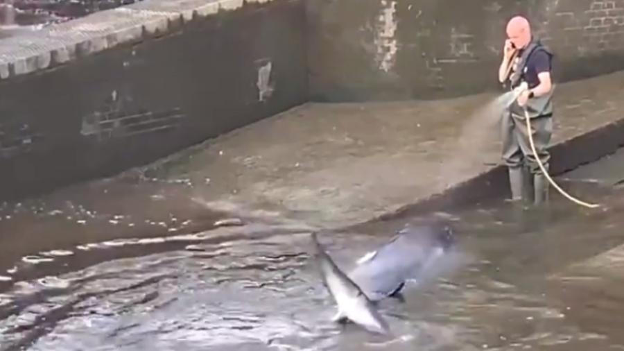 Filhote de baleia no rio Tâmisa, em Londres - Reprodução/Twitter