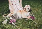 Cachorrinha ganha o ensaio de grávida mais fofo que você vai ver hoje - Reprodução/Twitter/Clayton Foshaug
