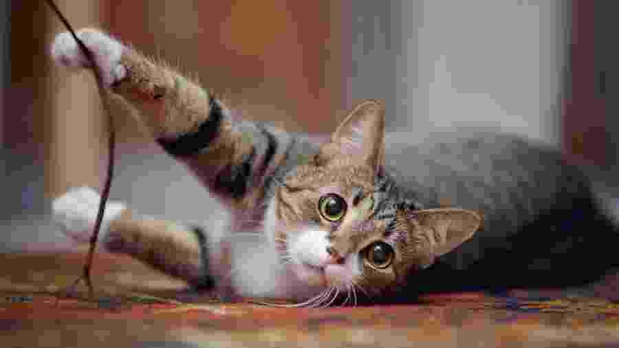 Gato pode representar proteção espiritual e quebra de uma maldição - Azaliya/Getty Images/iStockphoto
