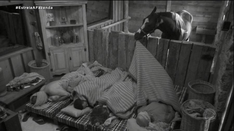 A Fazenda 2021: Cavalo acorda os peões da baia - Reprodução/PlayPlus