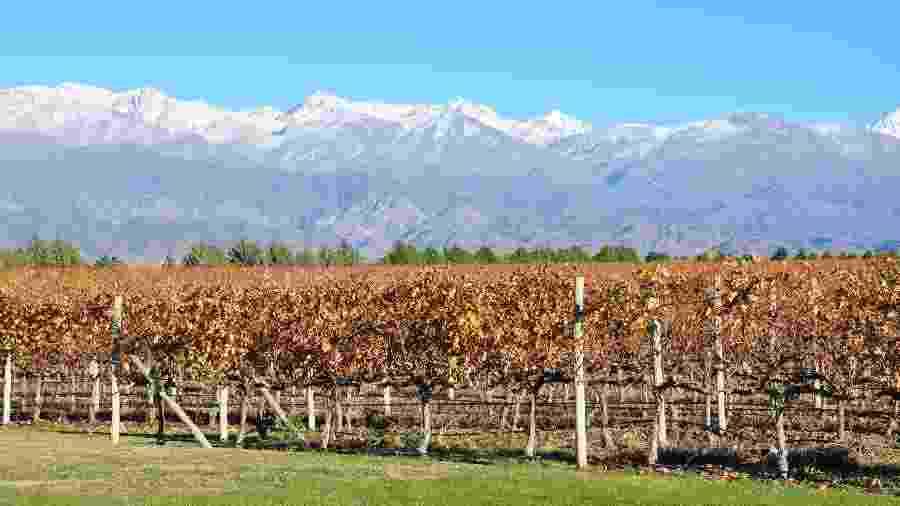 No clima desértico aos pés da Cordilheira dos Andes, Mendoza é um oásis de vinho e boa gastronomia - Divulgação/Secretaria de Turismo de Mendoza
