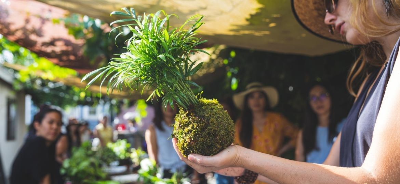 Kokedama é uma técnica japonesa para cultivo de plantas em bolas de musgo - Getty Images/iStockphoto