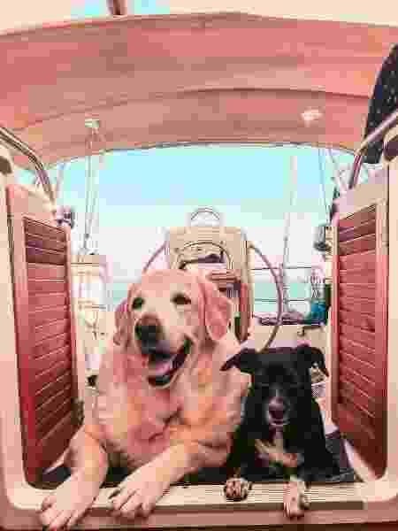 As companhias caninas do casal no veleiro - Arquivo pessoal - Arquivo pessoal