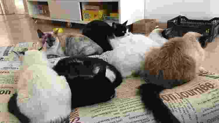 Beatris hoje tem nove gatos: Mercvrivs, Clara, Simba, Chocolate, Guda, Pimenta, Pipoca, Pufosa, Jujuba e Keka - Arquivo pessoal - Arquivo pessoal