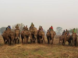 Técnicos de pesquisa se movimentam pelos campos montados em elefantes - National Trust for Nature Conservation (NTNC)/Divulgação - National Trust for Nature Conservation (NTNC)/Divulgação