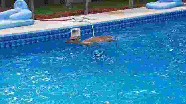 Cervo nada em piscina - Reprodução/Facebook - Reprodução/Facebook