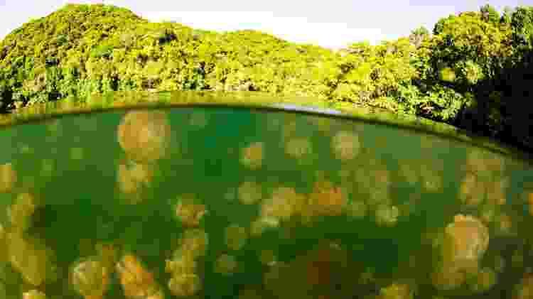 As águas-vivas do lago Ongeim'l Tketau não causam danos ao ser humano - atese/Getty Images/iStockphoto - atese/Getty Images/iStockphoto