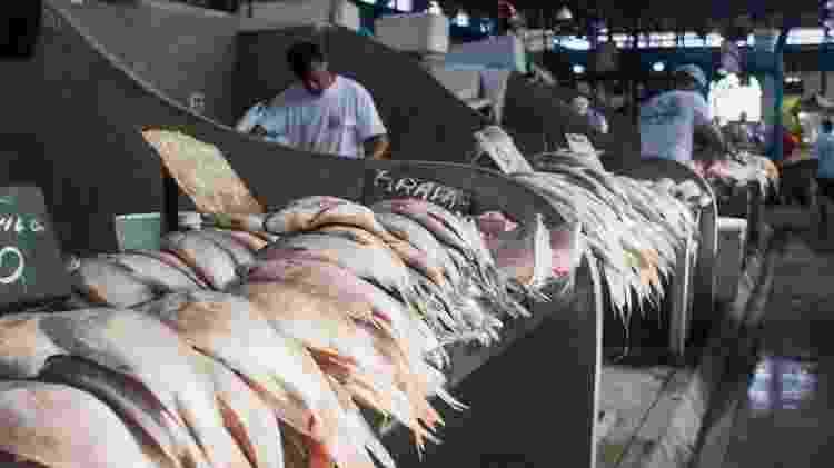 ver o peso - boieiras - peixes - Getty Images - Getty Images