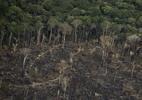 Desmatamento na Amazônia sobe 25% no primeiro semestre e bate recorde