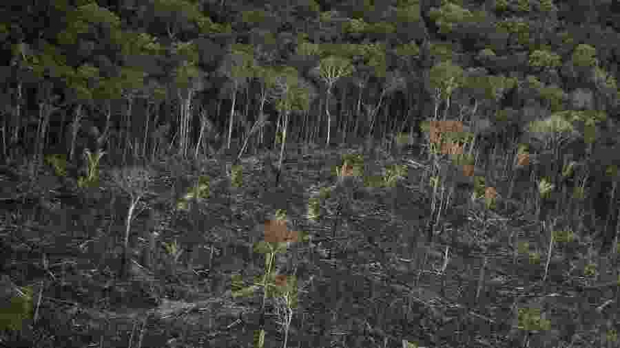 Foto tirada em setembro de  2019 mostra área desmatada e queimada na floresta Amazônica, nos arredores de Porto Velho - Bruno Rocha /Fotoarena/Folhapress