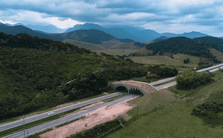 Viaduto sobre a BR-101, no Rio de Janeiro. À esquerda da rodovia está a Reserva Biológica de Poço das Antas; à direita, uma área que está sendo reflorestada. Quando toda a vegetação crescer, tanto a do viaduto e quanto a da área reflorestada, haverá um contínuo de vegetação uniforme - Wanderson Chan/AMLD - Wanderson Chan/AMLD