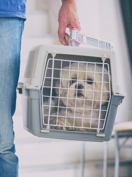Saiba quais medidas tomar quando há problemas no transporte de pets - Getty Images/iStockphoto