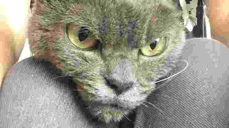 A gatinha mais brava do mundo - Reprodução/Twitter - Reprodução/Twitter
