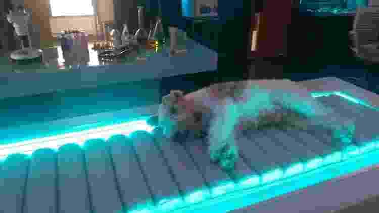 Veterinária explica que o cachorro Pirata aprendeu a ficar na cápsula por estímulo com petiscos - Arquivo pessoal - Arquivo pessoal