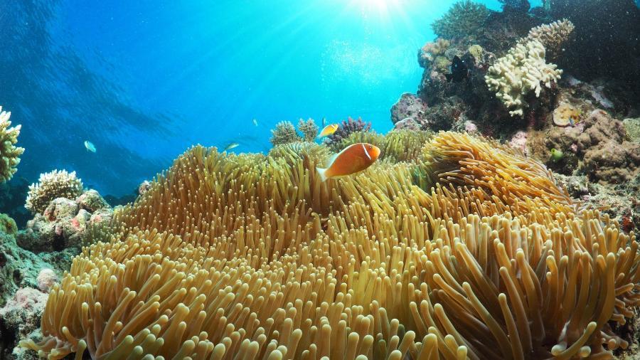 Inclusão da Grande Barreira de Corais na categoria seria vergonhosa para Austrália - Coral_Brunner/Getty Images/iStockphoto