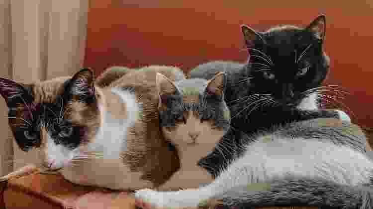 Os gatos de Jeska: Arya, Zooey e Pudim - Reprodução/Instagram - Reprodução/Instagram