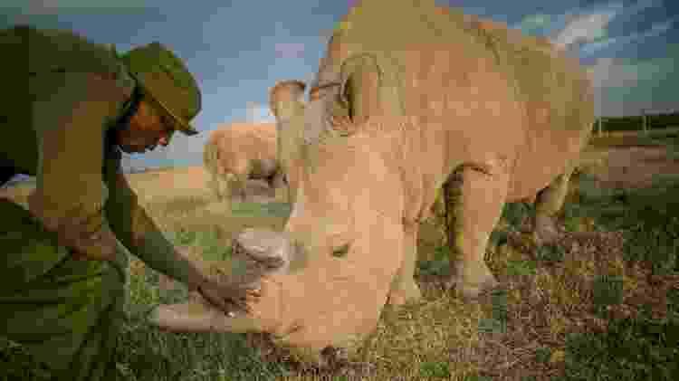 Rinocerontes brancos de Ol Pejeta, no Quênia - Divulgação/Ami Vitale - Divulgação/Ami Vitale