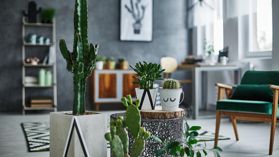 Conheça os tipos de cactos, os cuidados com as plantas e como decorar a casa com eles - Getty Images/iStockphoto