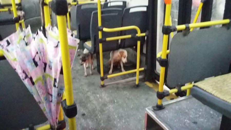 Cachorrinhas em ônibus de Buenos Aires - Reprodução/Facebook