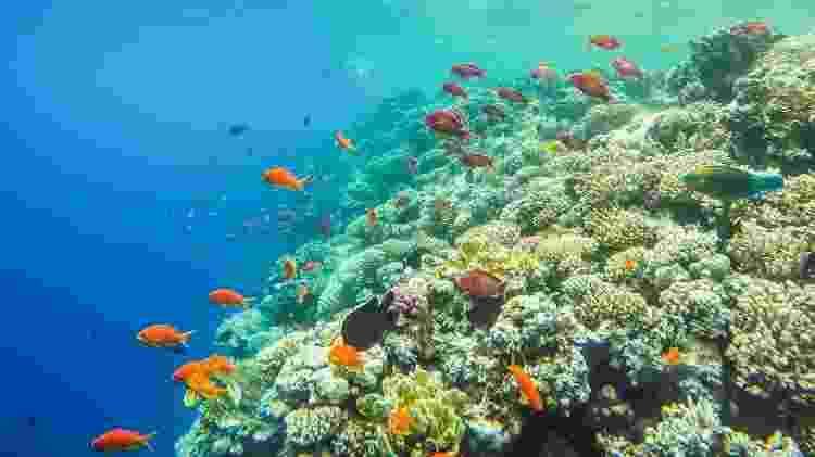 Peixes e corais no mar de Sharm el Sheikh, no Egito - iStock