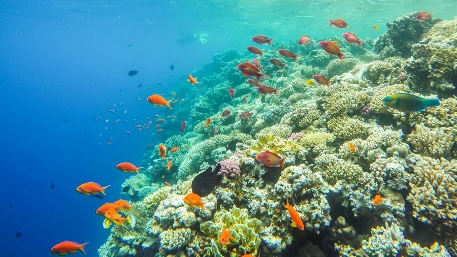 Um novo estudo estima que até 16% do carbono no mar vem de fezes, respiração e outros excrementos dos peixes - iStock