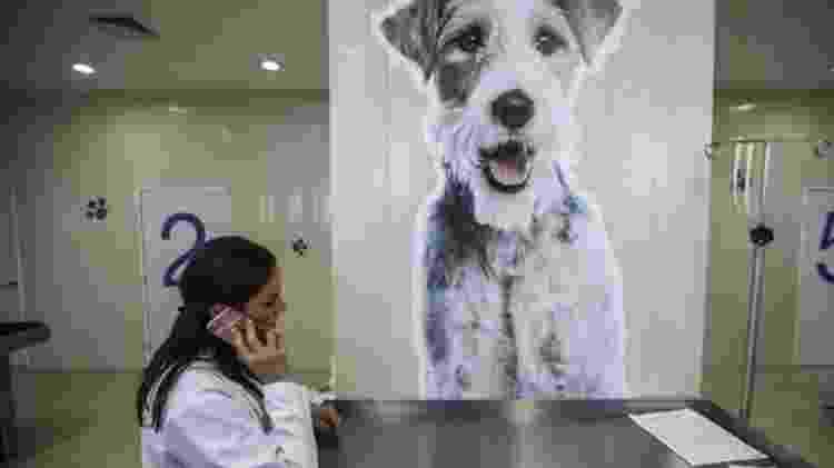 Silvia Viruega é uma das mais renomadas veterinárias do México - Clayton Conn/BBC - Clayton Conn/BBC