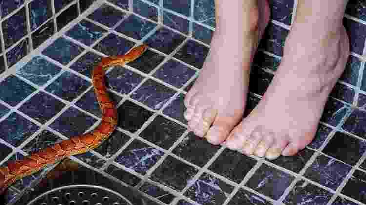 Após os testes, quando o inconsciente pensava no animal, a cobra ou a aranha se associava a um sentimento positivo - iStock