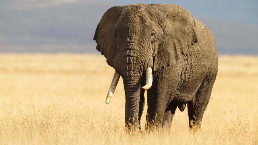 """O homem foi encontrado """"esmagado"""" após ser pisoteado por elefantes - iStock"""