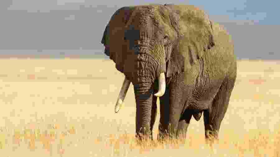 Elefante - iStock