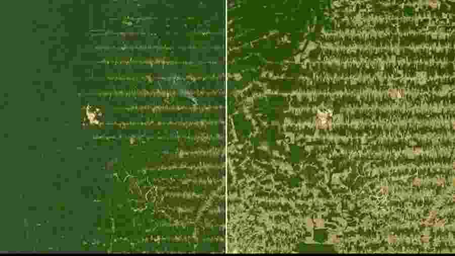 Comparação de área da floresta amazônica em Rondônia em 2006 e 2018 - Reprodução/Instagram
